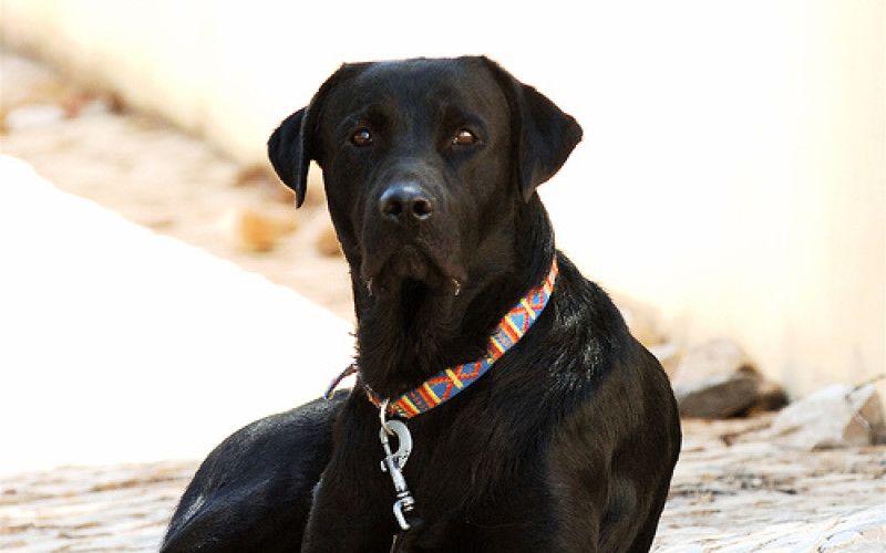 5 Awesomely Shock Collars for Dogs