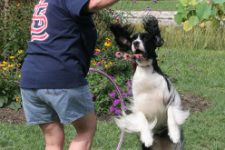 Quick Dog Obedience Training in 10 Easy Steps