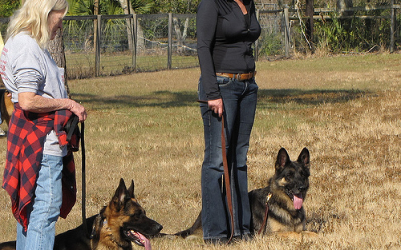 10 Highly Effective Dog Training Tips that Work Instantly