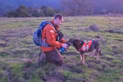 Ridiculously Simple Tips to Improve Your Dog Training