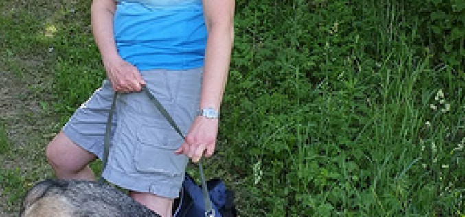 Proven Ways to Make the Most Out Of Dog Leash Training