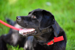 Four Safe and Comfortable Shock Collars for Dogs