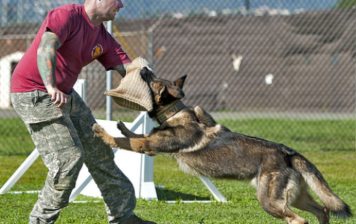 7 Tips about Dog Attack Training You Need To Know